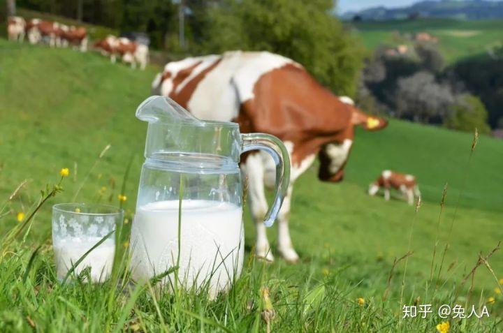 新疆牛奶芙拉薇赫纯牛奶华南广东深圳供应商一件代发社区团购合作