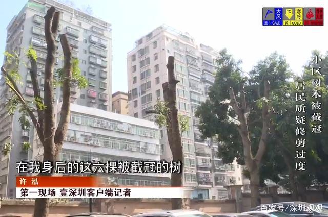 """深圳一小区树木一下子成了""""光秃秃"""",居民不能接受,物业回应"""